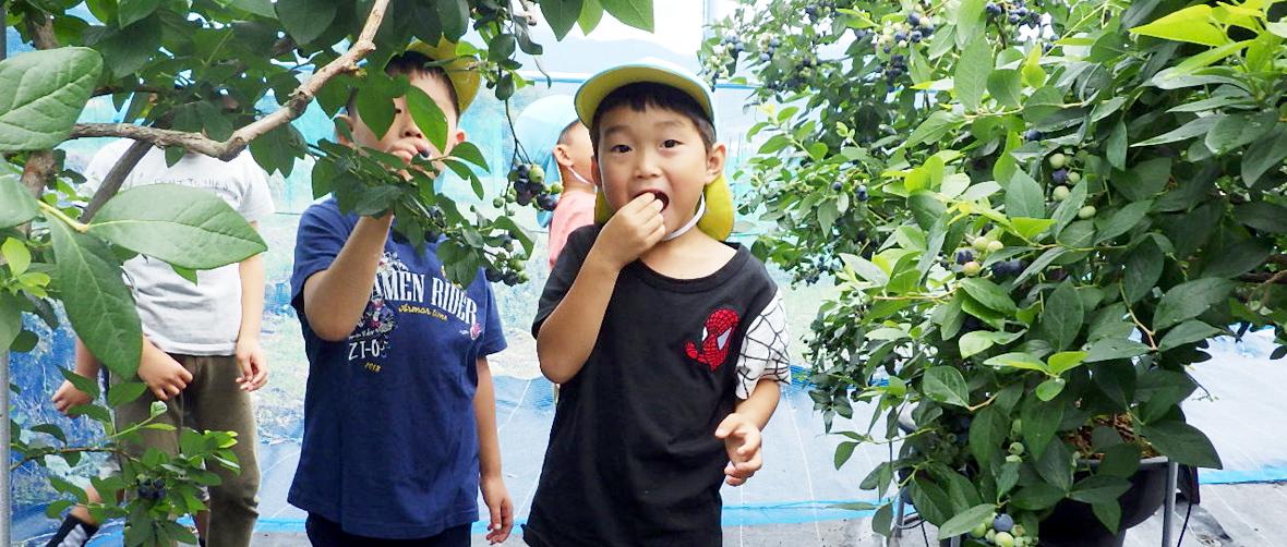 ブルーベリーを食べる子どもたち